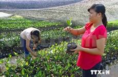 Nam Dinh pilots Vietnam Forests and Deltas Programme