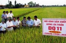 Vietnam to set up IRRI national office
