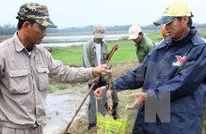 Vietnam takes active measures to prevent bubonic plague