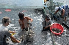 Ca Mau province's seafood output reaches record high