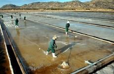 Salt production surges despite low prices