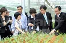 Japanese prefecture helps Nam Dinh develop hi-tech agriculture