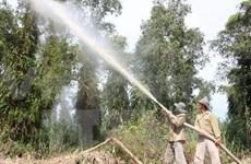 Ca Mau's U Minh Ha cajuput forest temporarily closed