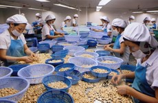 Vietnam's cashew sector sets records in 2014