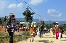 """""""Cow bank"""" project brings incomes to needy people"""