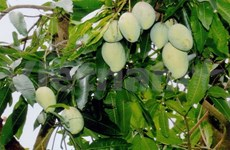 Mekong Delta seeks to brand its export fruits