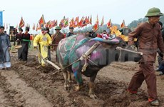 Ploughing festival to bring a good farming year