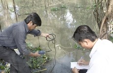 Saltwater intrusion threatens rice fields in Mekong Delta