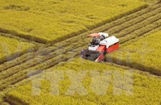 It's time for Vietnam's rice industry to develop trade mark