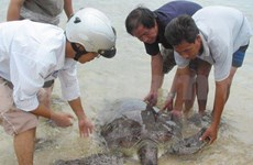 Large turtles found in Thua Thien-Hue waters