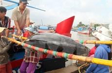 Binh Dinh's tuna fishermen urged to renovate techniques