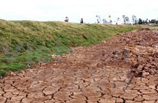 Drought affects cultivated crops in Dak Lak
