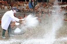 Thanh Hoa combats A/H5N6 bird flu