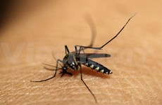 Conference to discuss cooperation on malaria elimination
