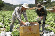 Lam Dong strives to be main supplier of farm produce for Japan