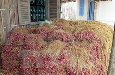 Railway companies offer assistance to onion farmers