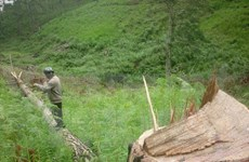 Forest land dwindles in Central Highlands' localities