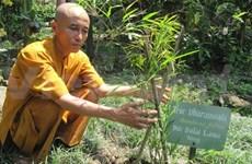 Buddhist monk spends life saving rare bamboo species