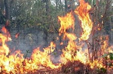 Central region intensifies forest fire precautions