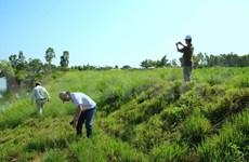 International conference on Vetiver grass opens in Da Nang