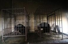 Vietnam moves to end bear captivity