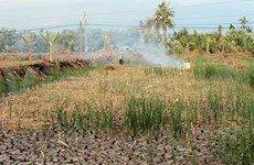 Mekong delta faces drought, salinity