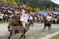 Horse race as highlight of cultural week in Lao Cai