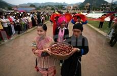 Bac Ha plum tree gardens lure visitors for harvest