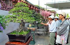 Asia-Pacific Bonsai Festival 2015 kicks off in HCM City