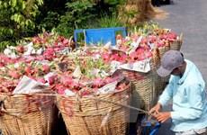 Competitiveness of Vietnam farm produce falling fast
