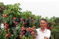 Vietnamese lychee meets Canadian standards