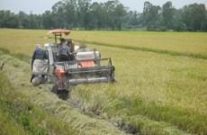 Mekong farmers harvest summer rice crops