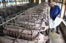 Competition heats up for animal husbandry sector