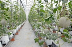 Quang Ngai unveils hi-tech agricultural planning
