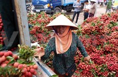 Fruit exports could reach 2 billion USD