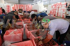 Vietnamese firms should prepare for Vietnam-EAEU FTA