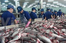 Tra fish output increases, exports down