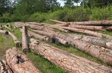 Alarming deforestation in Central Highlands