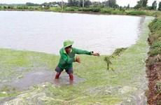 Mekong Delta suffers severe saline intrusion