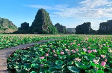 Surprisingly beautiful lotus pond in autumn