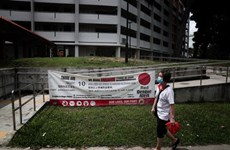 Singapore sees record weekly dengue infections
