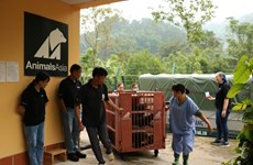 Seven captive bears transferred to rescue centre