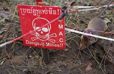 Cambodia deploys new team of mine sniffing rats