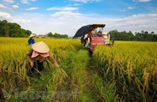 Minister: Vietnam looks towards sustainable agriculture