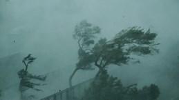 Typhoon Mangkhut wrecks havocs in its way