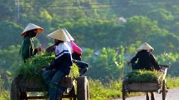 Soc Trang has 33 new-style rural communes