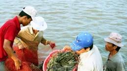 Bac Lieu promotes use of renewable energy in shrimp farming