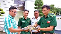 Ba Ria-Vung Tau: Rare sea turtle released into nature