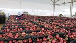 Central Highlands' largest fruit, vegetable processing centre opened