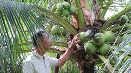 Ben Tre develops value chains for key agricultural products